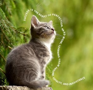 cat_example text on a path